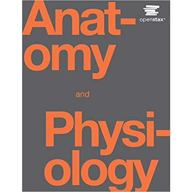 USED || OPENSTAX / ANATAOMY & PHYSIO