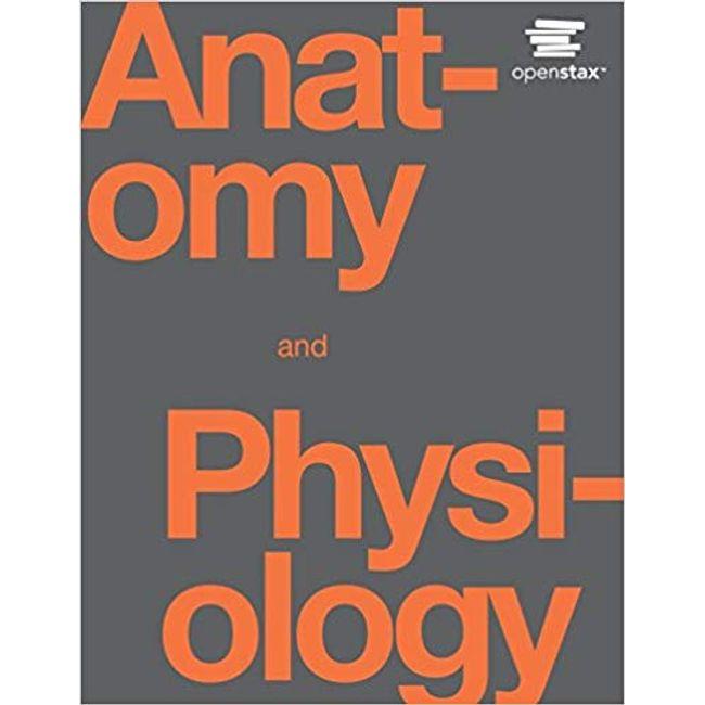 OPENSTAX / ANATOMY & PHYSIO